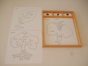 Botany activity cards