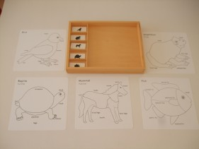 Animal activity set