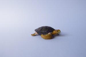 Loggerhead turtle                 L 7  H 2 cm