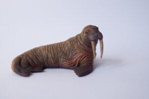 Walrus                                    L 12  H 6 cm