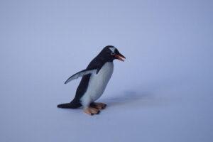 Rock hopper penguin           L 4  H 5 cm