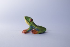 Red eyed tree frog                L 5.5  H 3.5 cm
