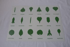Botany Cabinet Control Chart                    (18 Insets)