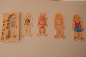 Anatomy puzzle set girl