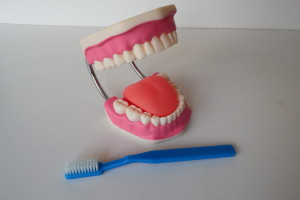 mouth and teeth model